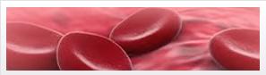 Laboratório de Processamento Celular e Criopreservação
